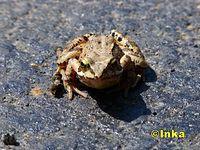 Pocałuj żabcie w łapcie ;)