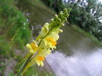 Jakieś żółte kwiatki