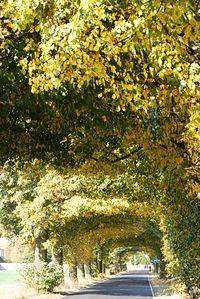 Tunel żółto-zielony