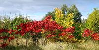 Kolory jesieni - szkoda, że słońce było tak krótko