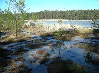 Użytek ekologiczny Bagno w Jeziorze