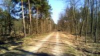 Las z Wymysłowa na Rogoźnik