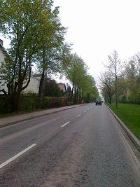 Piękne drzewa wzdłuż drogi