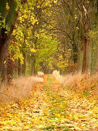 Jesień w lesie, okolice Kyritz