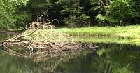 Rzeka Słubia w Cedyńskim Parku Krajobrazowym