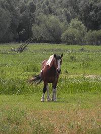 Koń spotkany w Siekierkach