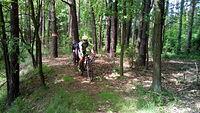 W Bibielskim lesie