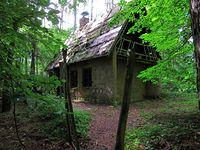 Tajemniczy domek pośród lasu w Puszczy Zielonce