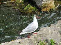 Ciekawy ptak przyglądał mi się nad Jeziorem Rogozińskim