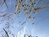 Świat z perspektywy leżącego w trawie