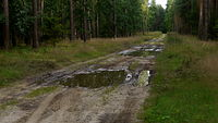 Jak polubić leśne drogi gruntowe?