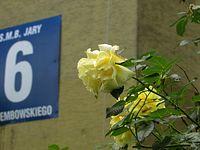 Róże z Dembowskiego