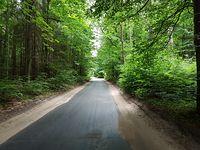 Leśne zacisze w drodze do Zbychowa