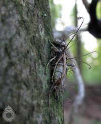 Zagrzybiona osówka