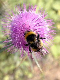 Zbieranie pyłków