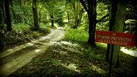 Strychy - Międzychód , aleja starych drzew