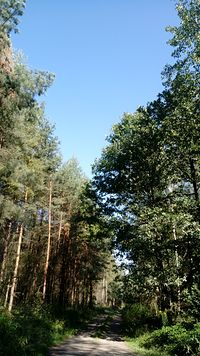 Las i błękitne niebo!