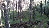 Las w Chechle