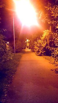Aleja drzew na Gierdziejewskiego