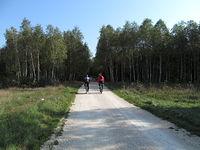 Na leśnych drogach w okolicy Przedborza