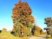 Słoneczna jesień lepsza niż deszczowe lato