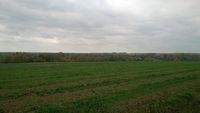Pola w Kiełczewicach