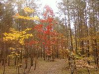 Las w Rąbieniu