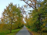 Moja alejka na Gierdziejewskiego - jesień pełną parą