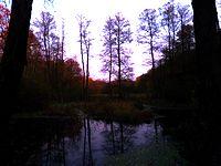 W lesie strona wschodnia