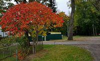 Warnice - Kolory jesieni