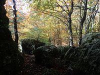 Skały i jesienny las