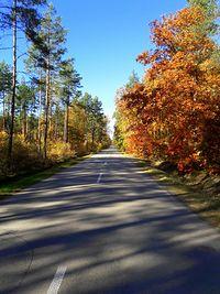 Jesienią nawet asfalty pięknieją I