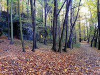 W Rezerwacie Parkowe II