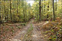 Złota jesień w Stobrawskim Parku Krajobrazowym