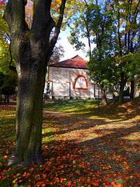 Jesień w Parku Staszica VII