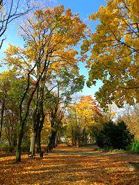 Jesień w Parku Staszica IV
