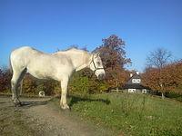 Koń udający posąg