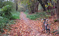 Na rowerówce Łęczyca - Puszczykowo w 100% jest listopadowo
