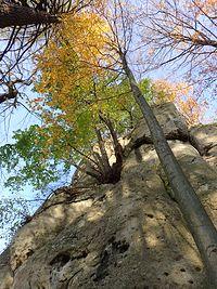 Drzewa na skale