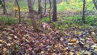 Kotek na skraju lasu Arkońskiego