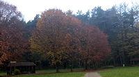 Polana sportowa - ciemnieją kolory jesieni