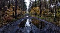 Droga Niedźwiedź - Zdunowo