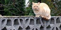 Kotek z miejscowości Pampow