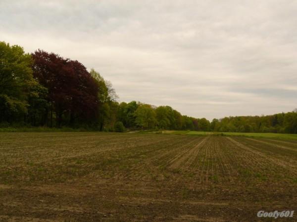 Pole w miechowickim lesie