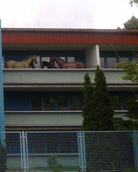 Konie na balkonie?