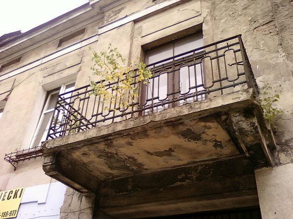 Brzoza na balkonie