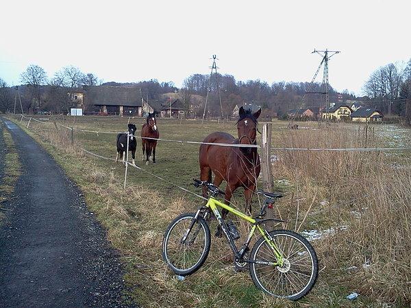 Konie w Boguszowicach