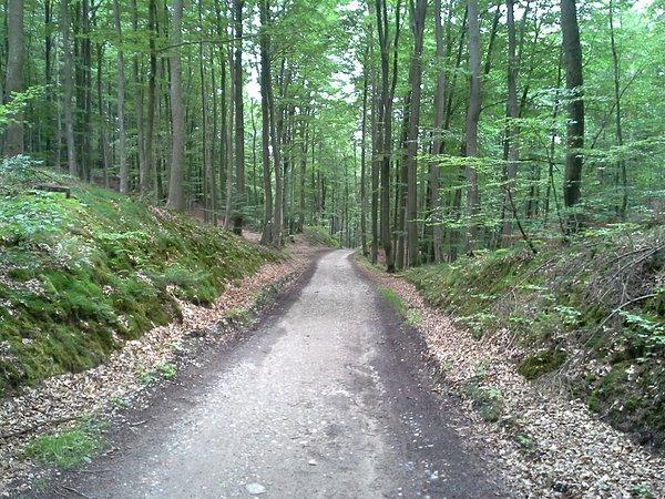 Gdzieś w lesie :-)