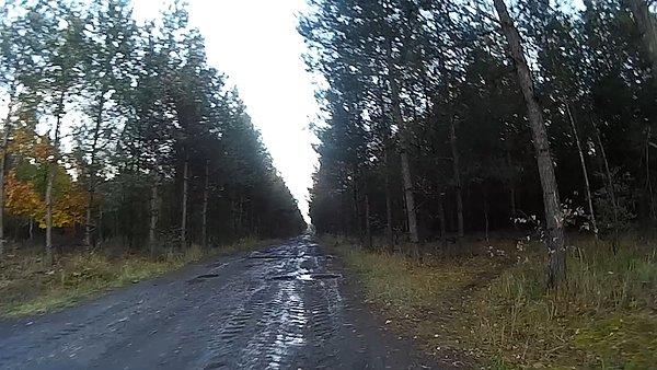 Trochę błota w lesie