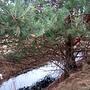 Drzewo nad rowem